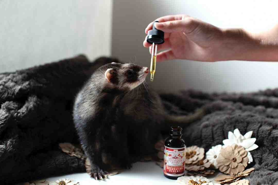 Can I put baking soda in my ferrets cage?