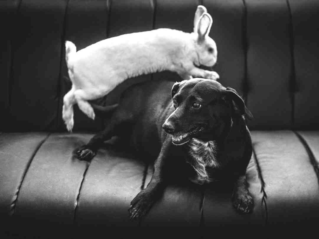 How rabbits mate