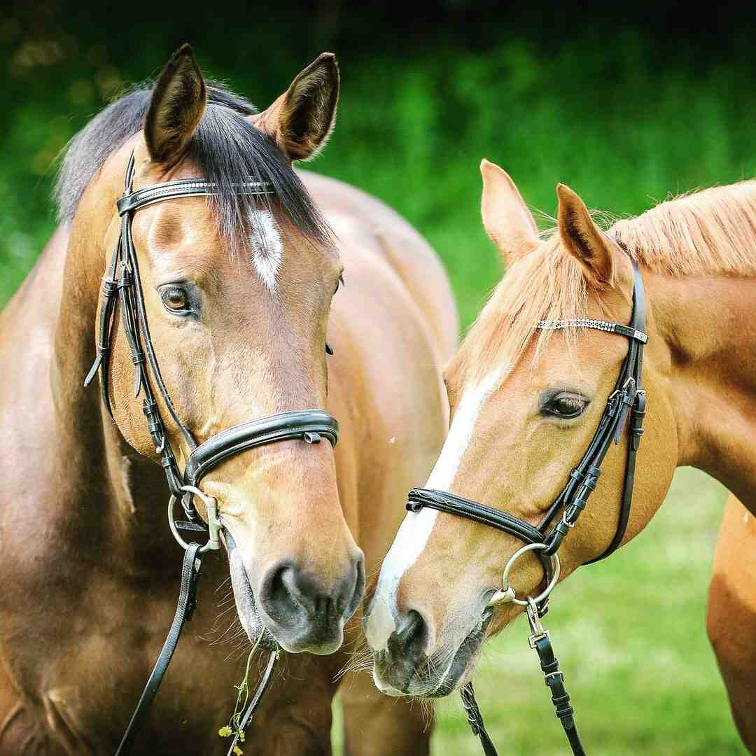 How to Prevent Heaves in Horses