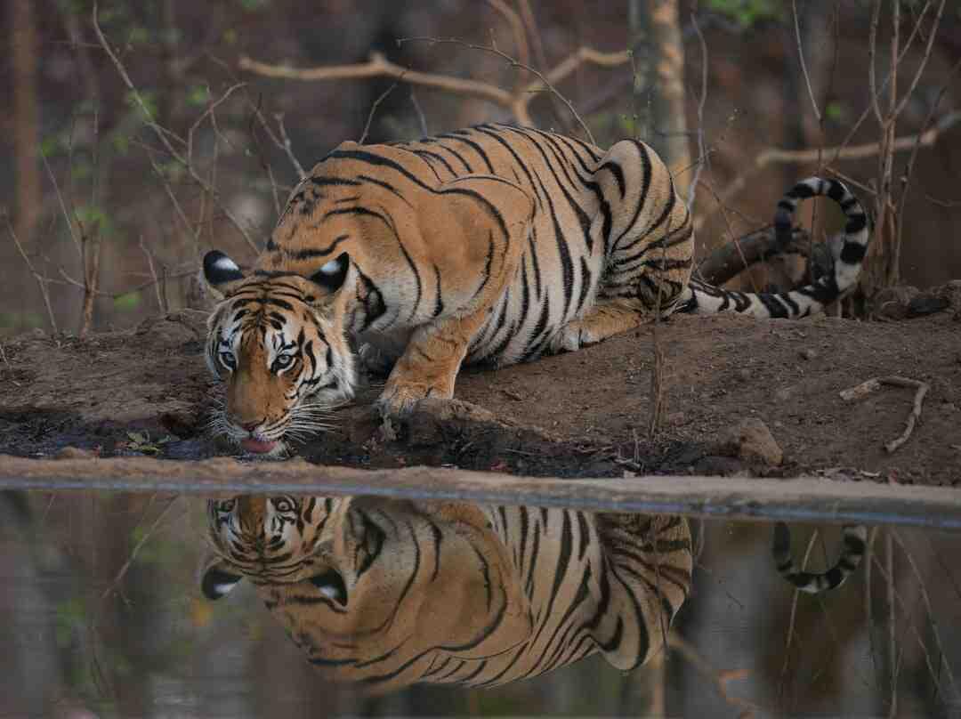 How to wildlife photography