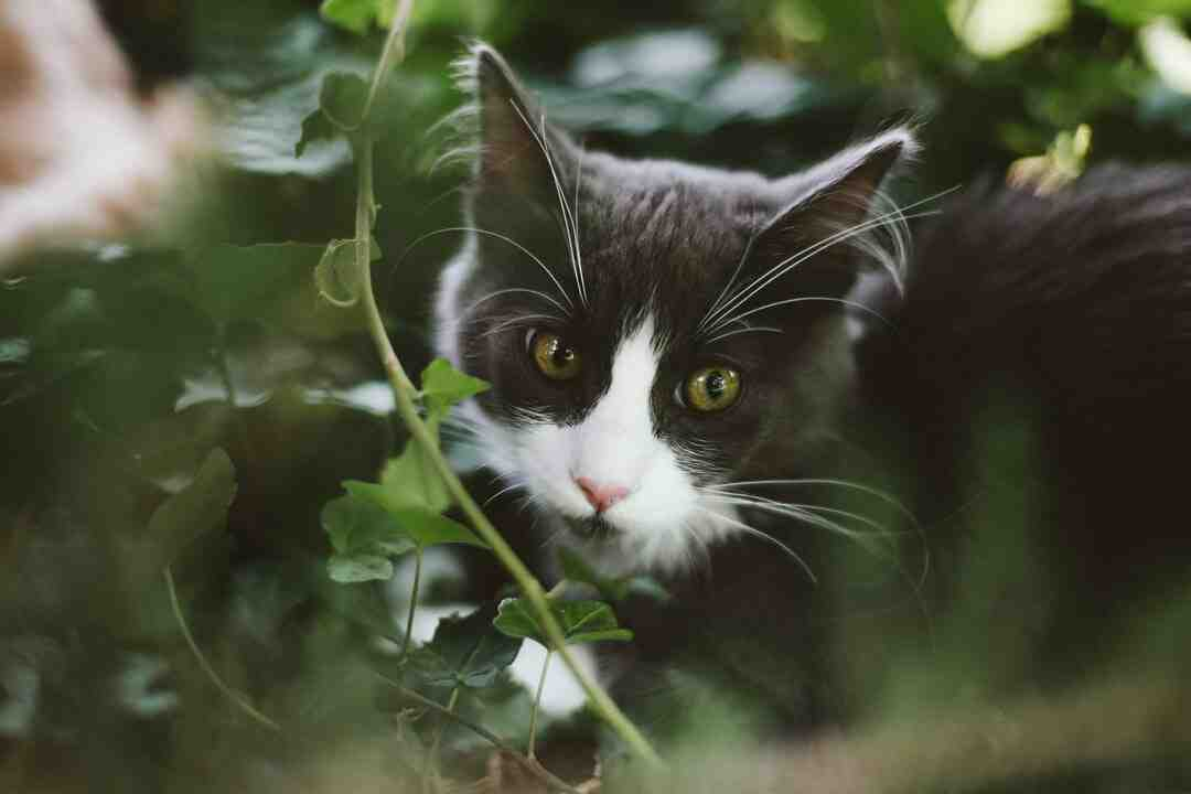 How cats became domesticated