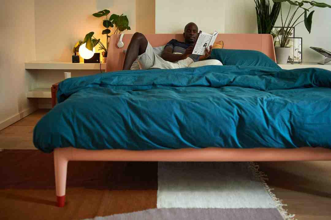 How do bed bugs happen