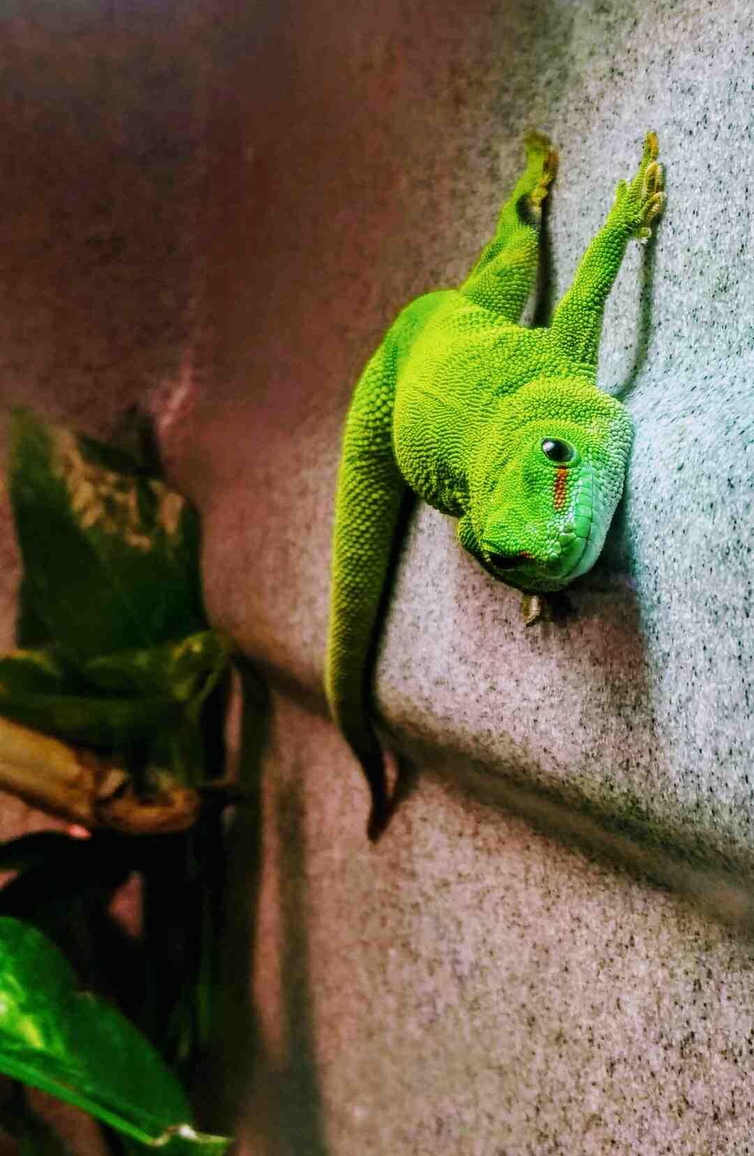 How do reptiles breathe