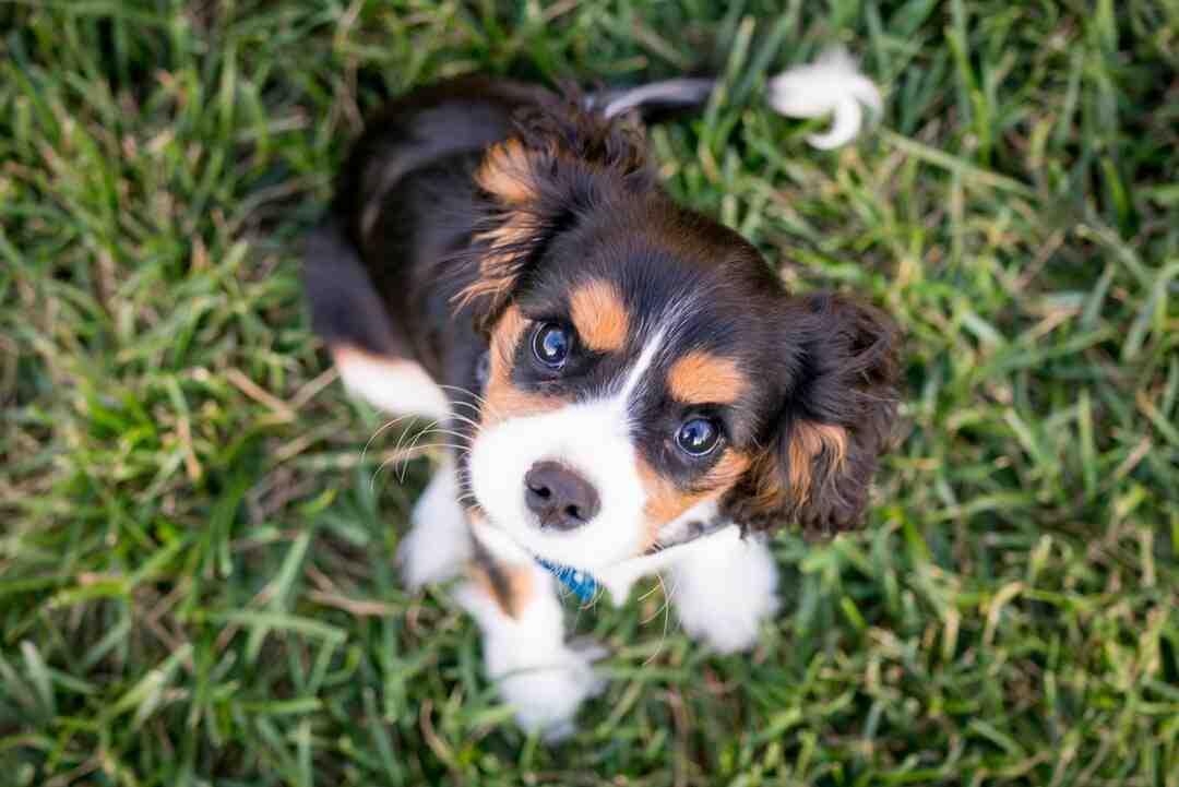 How do you make a hurt dog feel better?
