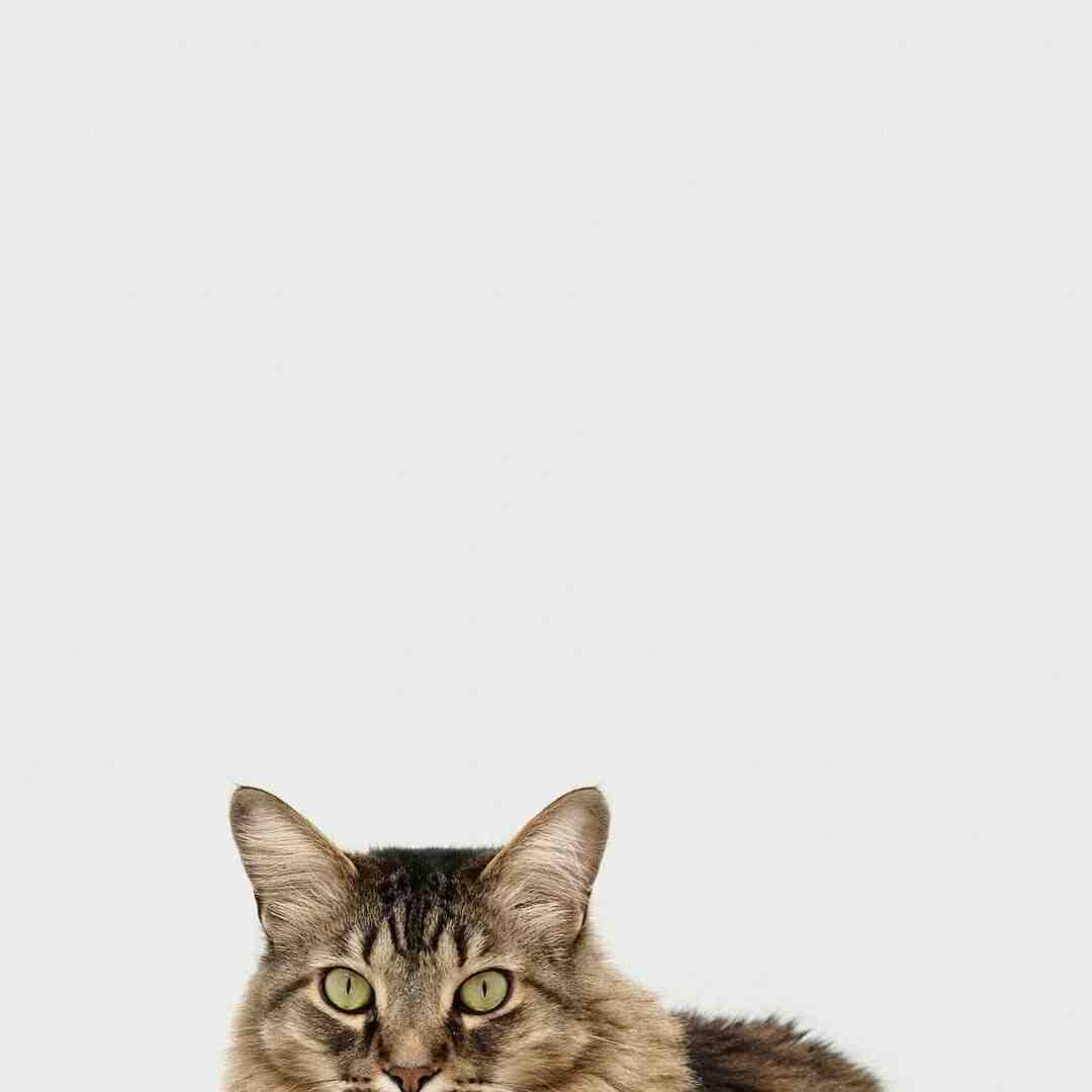 How do you show your cat you respect them?