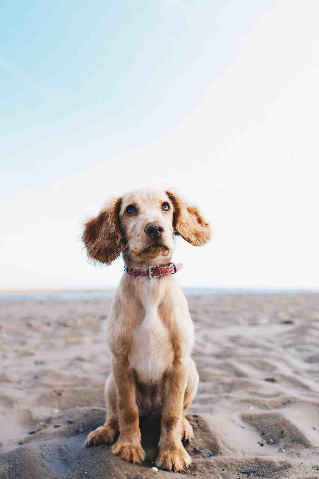How to Contact a Dog Breeder