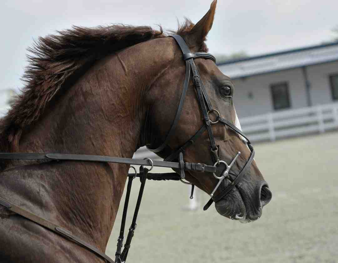 How to Plait a Horse's Tail