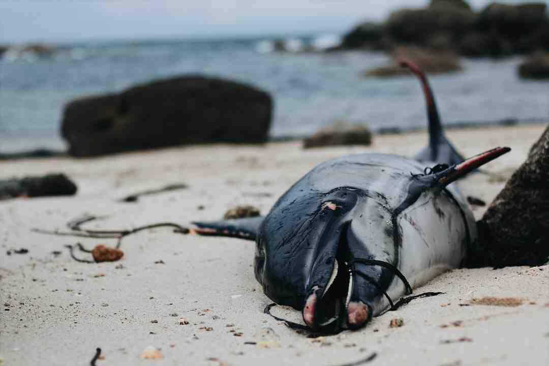 What do crustaceans eat