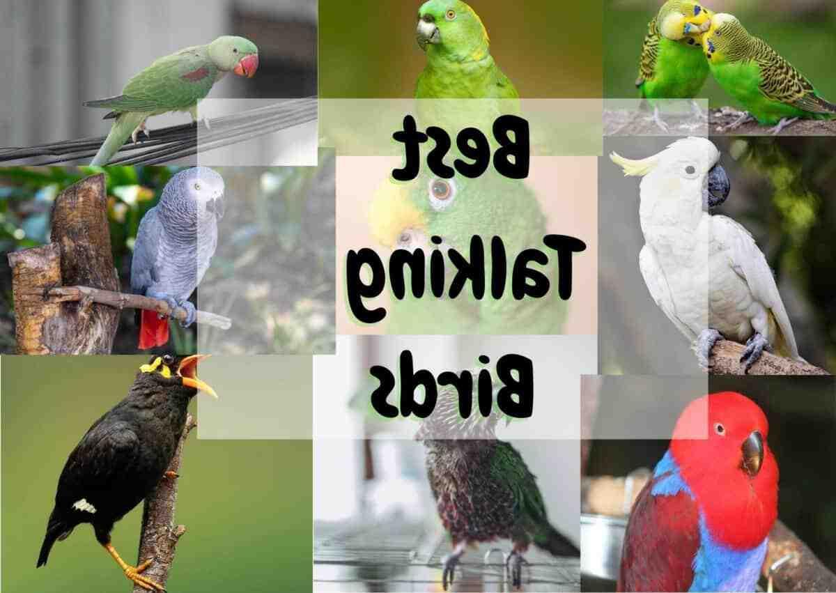 Birds that can talk