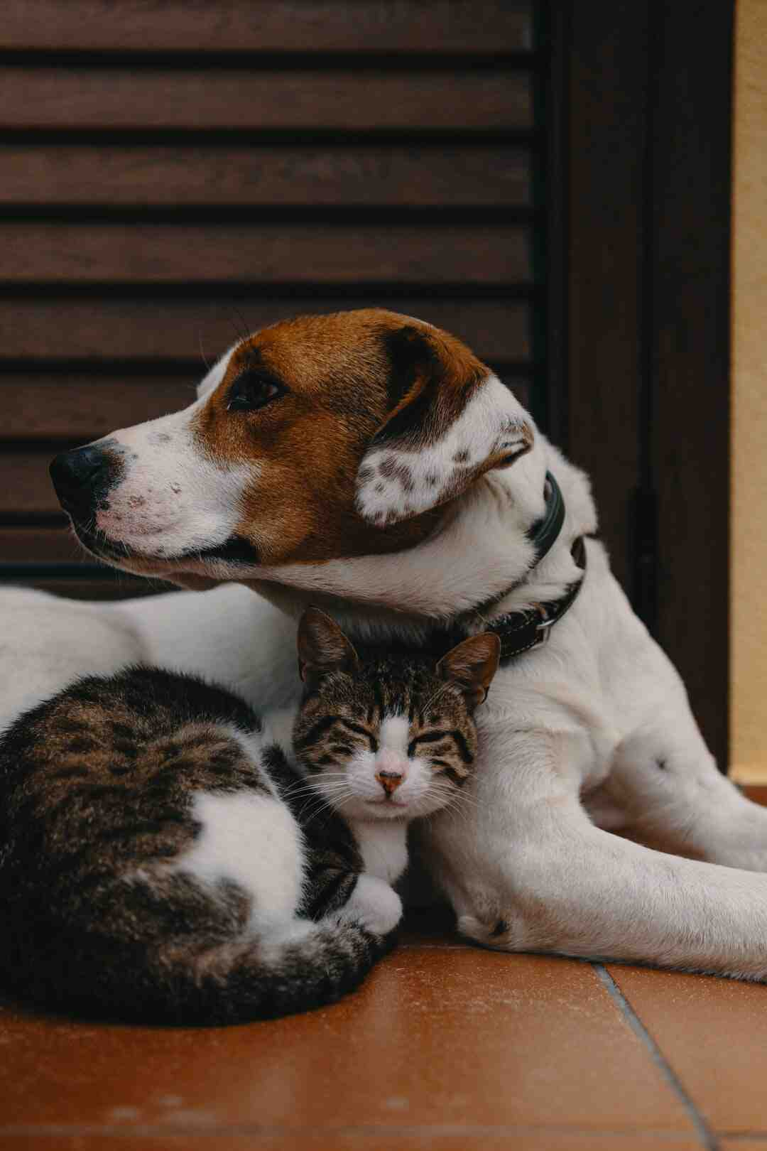 How cats are better than dogs