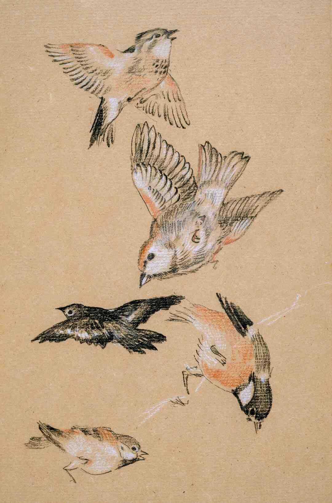 How repel birds